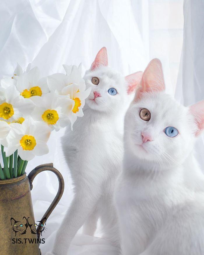 Ирис и Абис - самые красивые близнецы в мире