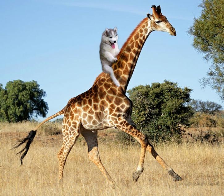 Посмотри на своего парня, а теперь на меня. Да, я на жирафе