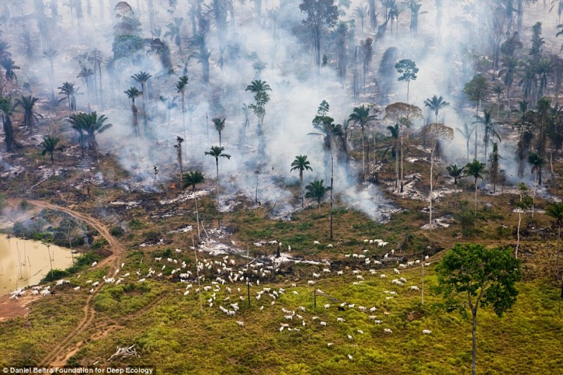Пожар в тропическом лесу. Когда-то здесь паслись дикие козлы.