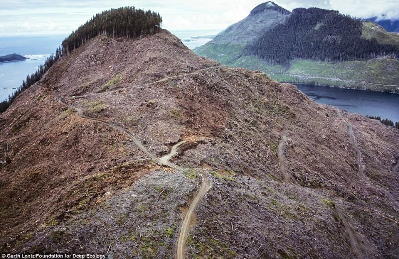 Кара бразильских тропиков постигает леса и здесь, в Канаде.