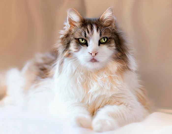 Мы даже не думали, что у кошек бывают такие глаза