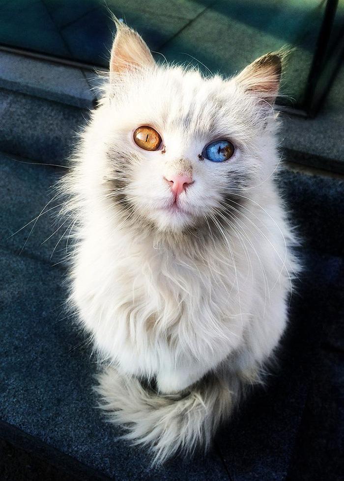 Этот кот просто гипнотизирует взглядом