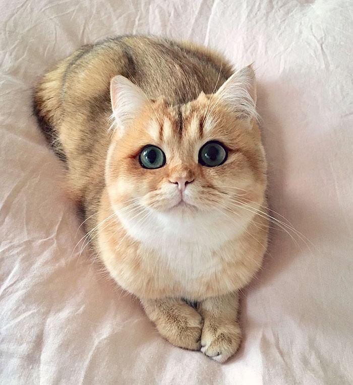 Это Пампкин и у нее как будто глаза накрашены обводкой