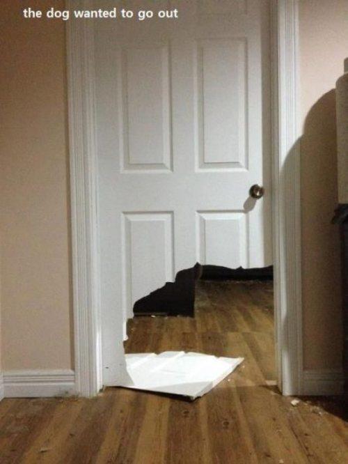 Пес просто хотел выйти из комнаты