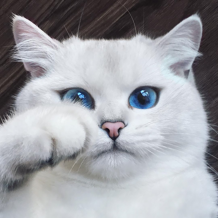 Это Коби и у него просто нереальные глаза