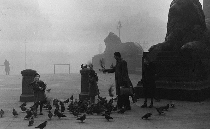 Транспорт санкт-петербурга начала 20 века длиннопост, история, историческое фото, санкт-петербург, транспорт