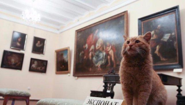 Поразительная новость: в один из музеев на работу официально взяли кота (Фото)