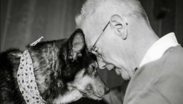 Несмотря ни на что: мужчина забрал себе с приюта пса, у которого обнаружили рак (Фото)