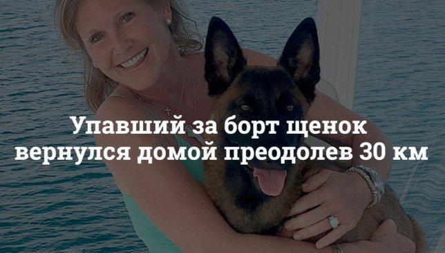 30 км пешком: как щенок вернулся домой, несмотря на все препятствия (Фото)