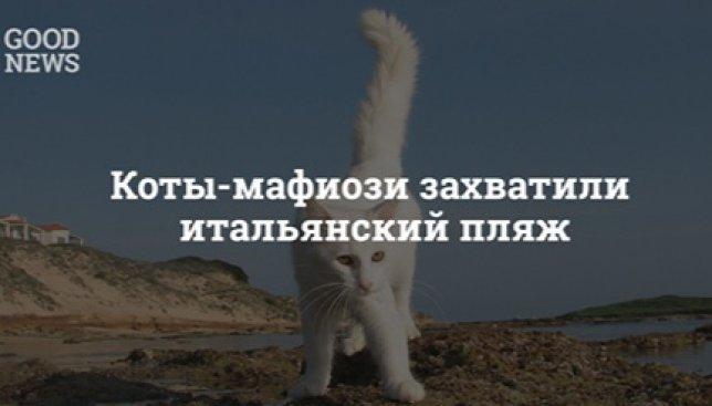 Курьезы из Италии: кошачья мафия захватила один из местных пляжей (Фото)
