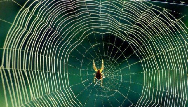 Что будет с пауками, если их накормить мухами с наркотиками