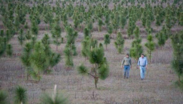 Человек с большой буквы: за свою жизнь он высадил 8 млн деревьев (Фото)