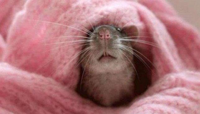 Штаны для крыс и протезы, чтобы почувствовать себя козой: как в Гарварде вручали антипремию (Фото)