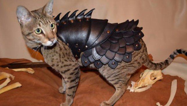 Курьезный наряд: кошкам придумали железные бронежилеты для странных целей