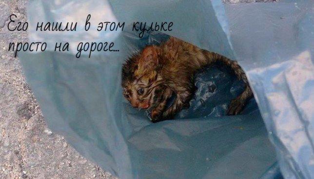 История о спасении маленького котенка не оставит никого равнодушным