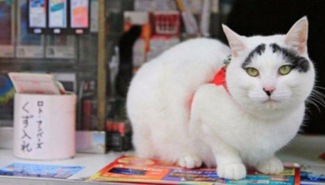 """Курьезы из Японии: """"счастливую"""" кошку официально трудоустроили на работу"""