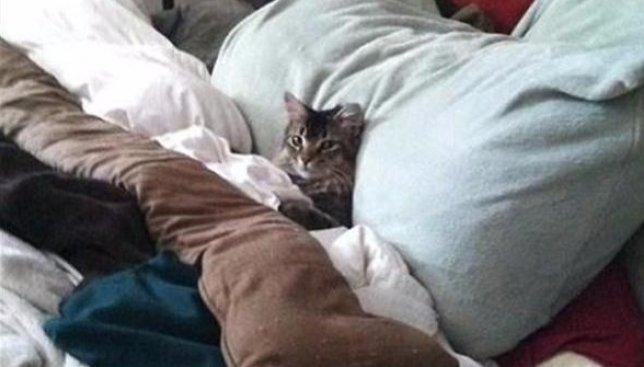 Британские ученые: когда заправлять постель полезнее всего для здоровья