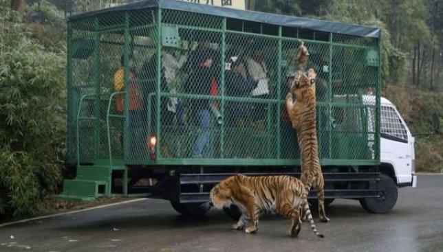 Необычный зоопарк: когда люди в клетках, а животные на свободе (Фото)