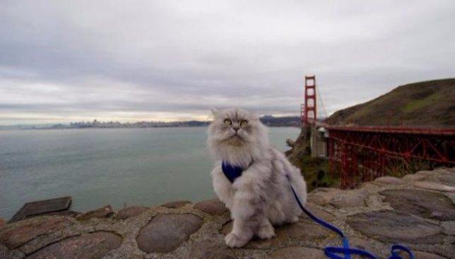 Кот, который за своих 2 года путешествовал больше, чем некоторые за всю жизнь