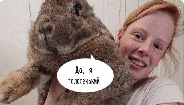 Самый большой кролик в мире поразил весь интернет