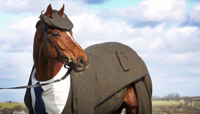 Лошадь, которой на заказ сшили официальный костюм, покорила сеть