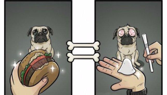 Люди и собаки: как кто на самом деле видит мир (Иллюстрации)