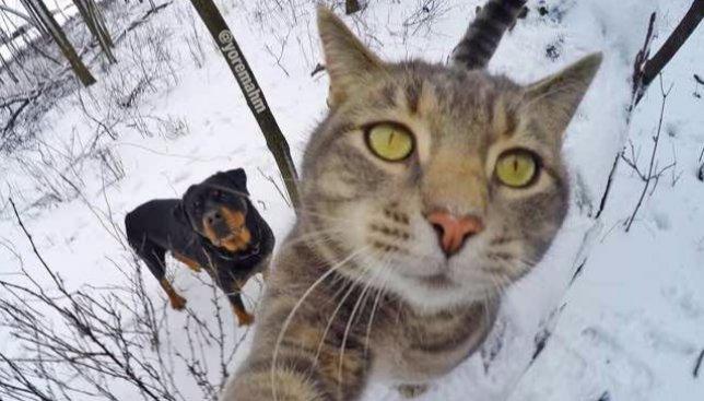 Кота мясом не корми, дай сделать селфи: смешные фото