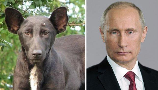 Невероятное сходство животных и знаменитостей: 21 веселая фотография