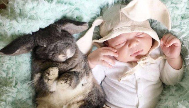 10 милых фотографий месячного ребенка и его лучшего друга кролика