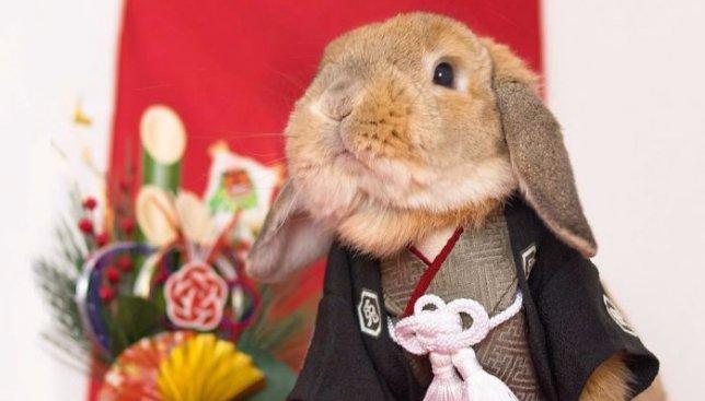 Самый модный кролик в сети: у него столько образов, что любая девушка будет завидовать (Фото)