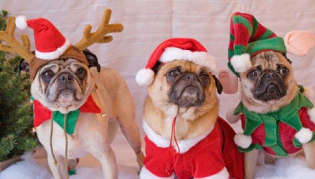 22 новогодних образа для вашей... Собаки