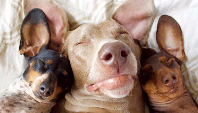 13 милых фотографий собачьей семьи, которые поднимут вам настроение на весь день
