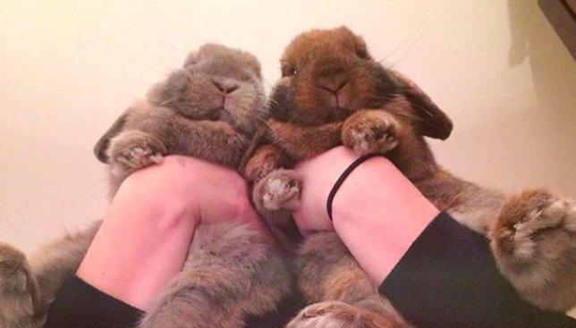 26 милых фотографий кроликов, которые поднимают настроение на весь день