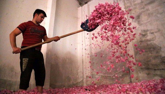 Розы лопатами загребают: почему в Турции все улицы покрыты лепестками (Фото)