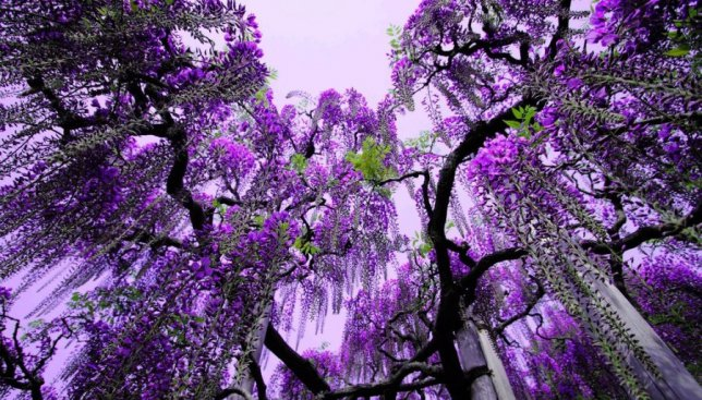 Япония во всей красе: какие цветы, кроме сакуры, поражают всех туристов (Фото)
