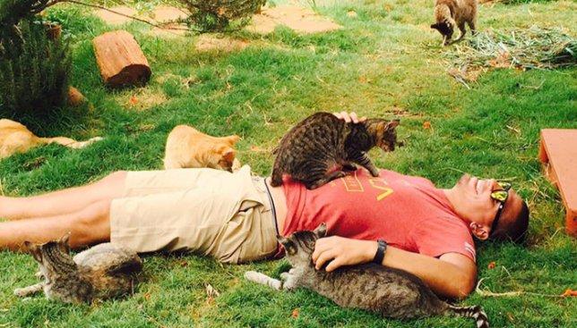 Коты для снятия стресса: как 500 пушистых способны успокоить каждого (Фото)