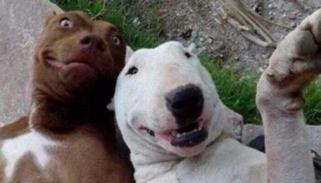 17 самых смешных селфи животных со всего интернета (Фото)