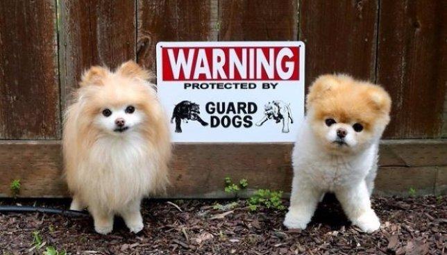 """Ко дню защиты животных: что на самом деле скрывается за табличкой """"Осторожно, злой пес"""" (Фото)"""