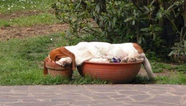 18 смешных фотографий собак, которые уснули в самый неподходящий момент