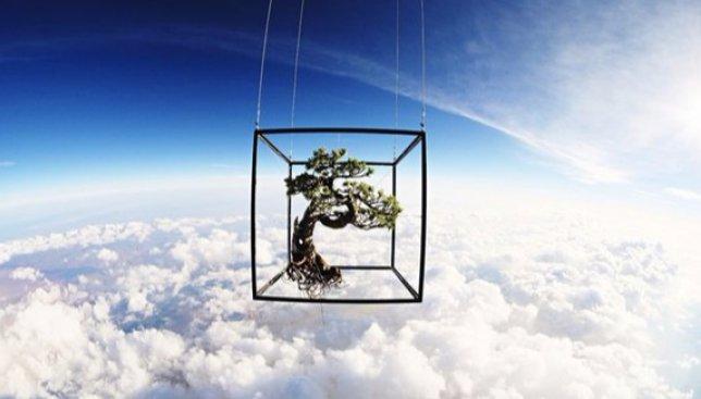 Дерево-путешественник: и в космосе, и под водой