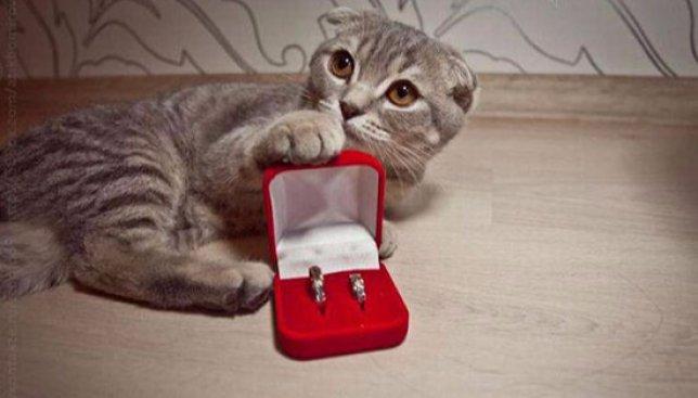 Новый необычный тренд: обручальные кольца, которые никогда не снимешь