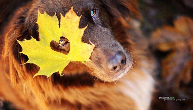 Сегодня день шуршания листьями: как радуются этому празднику собаки (Фото)