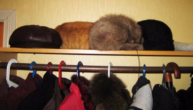 28 фотографий, на которых нужно очень постараться, чтобы найти кота