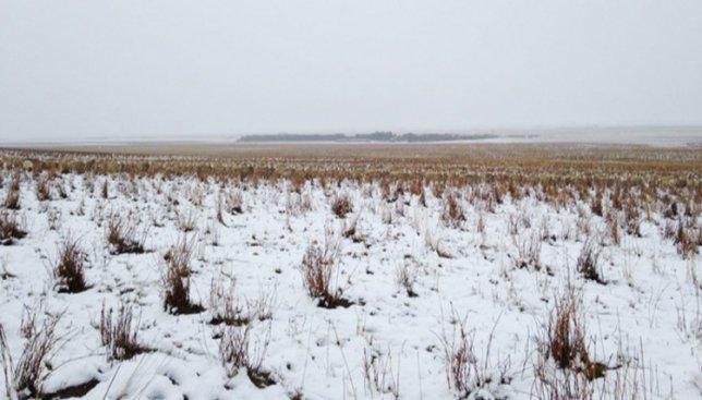 Фото, на котором весь интернет пытается найти 550 овец