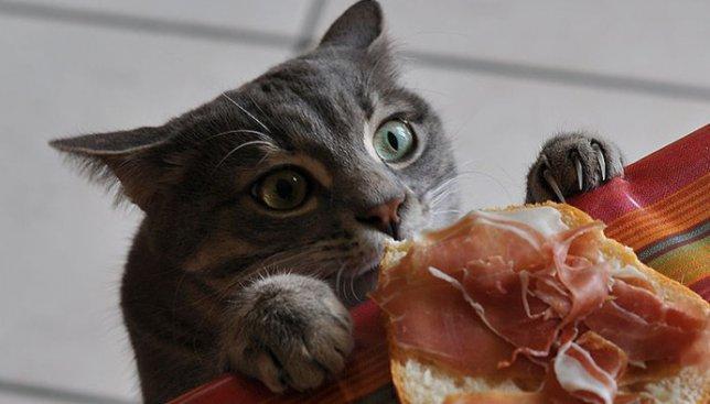 Гениальная подборка котов, которых застали врасплох: фото