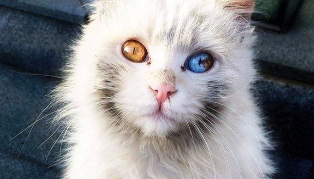 32 кота, у которых самые необычные глаза в мире (Фото)