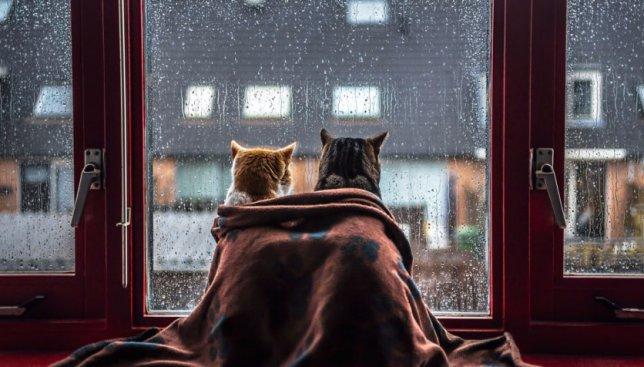 Осенняя хандра: как ведут себя коты в холодное время года (Фото)