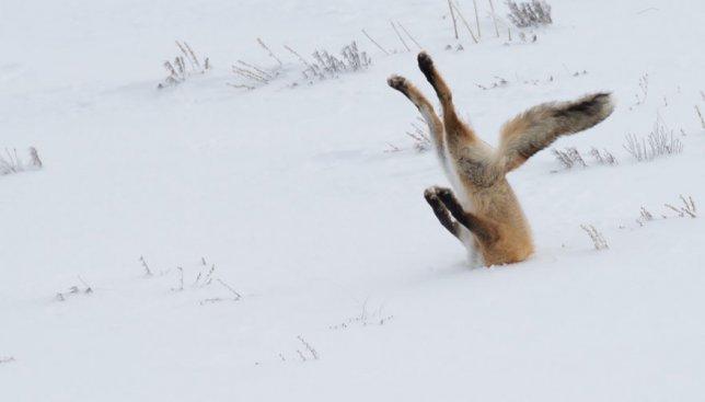 40 фотографий животных, которые названы самыми смешными на конкурсе Wildlife Photography Awards