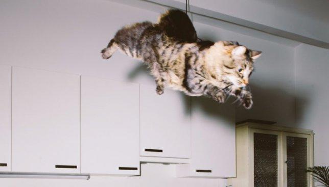 Ко дню домашних животных: как выглядят коты в полете (Фото)