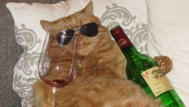 Смешная подборка котов, которые немножко перебрали с алкоголем